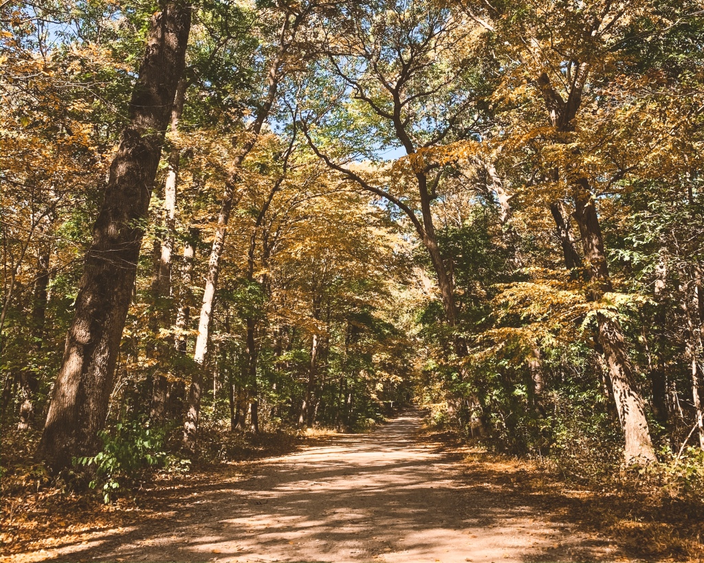 Fall in Caumsett State Park